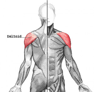 Deltoid raise workout